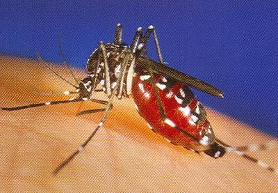 magazine articles with western world nile virus
